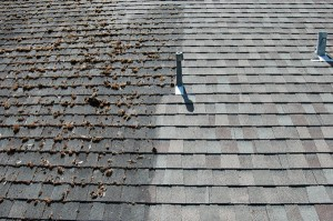 Halifax Roof Cleaning